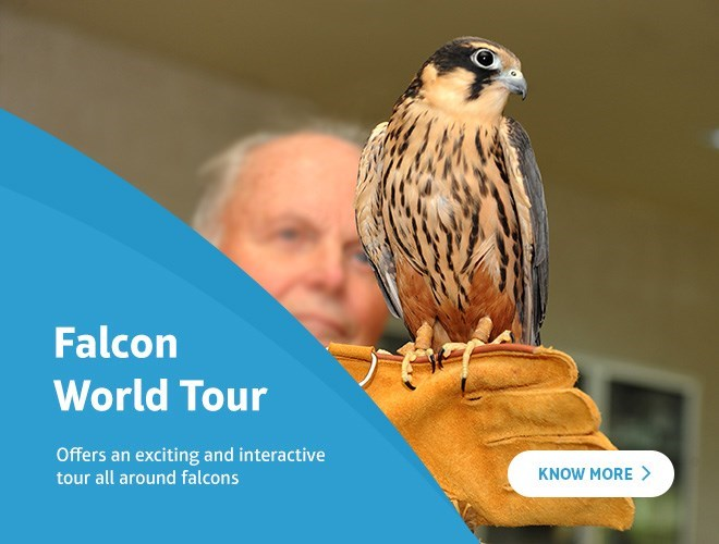 Falcon World Tour