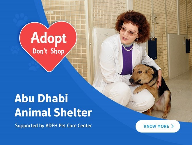 Home - Animal Shelter